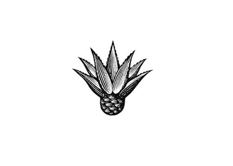 steven noble illustrations agave icon