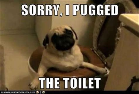 Funny Sorry Memes - funny animal pictures of the day 22 pics