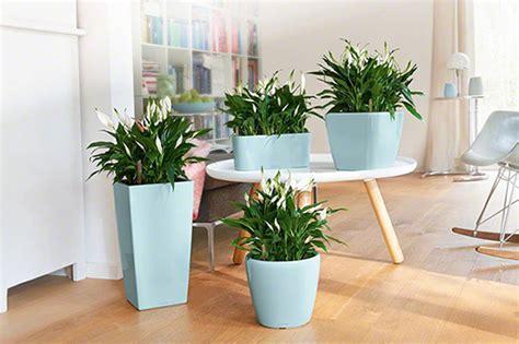 vasi per idrocoltura vendita piante in idrocoltura roma