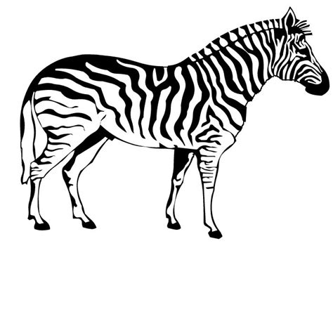 printable coloring pages zebra free printable zebra coloring pages for kids