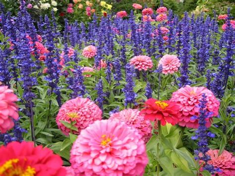 different type of flowers perennial annual spring summer fall bulb