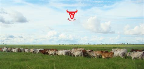 Pakan Udang Japfa lowongan kerja pt santosa agrindo japfa beef division