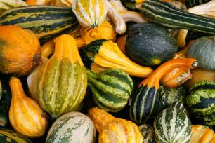 gourds d 233 finition exemple et image