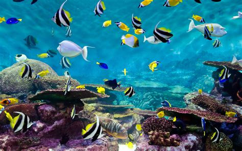Marine 35gr Makanan Ikan Laut Free fishes and coral underwater wallpapers13