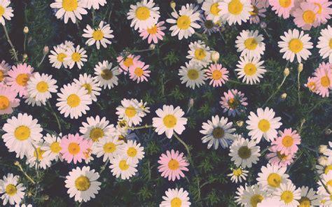 flower wallpaper tumblr hd desktop daisy hd photos flower tumblr wallpaper for