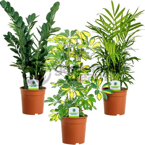 buy house plants online uk best live indoor plants photos interior design ideas gapyearworldwide com
