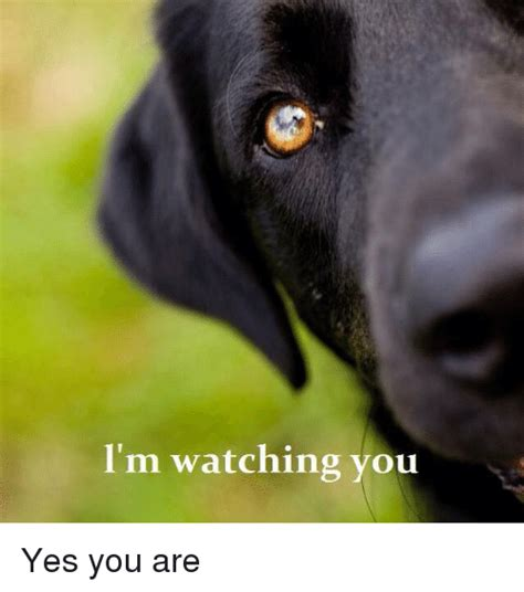 Im Watching You Memes - i m watching you yes you are meme on me me