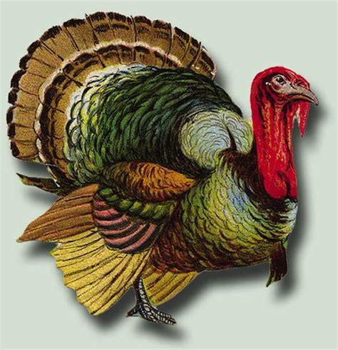 google images thanksgiving turkey 10 thanksgiving photoshop freebies