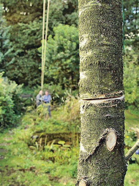Baum Fällen Preis 2232 by Preis Baum F 228 Llen Hochbeet Ideale Gro E Interessante