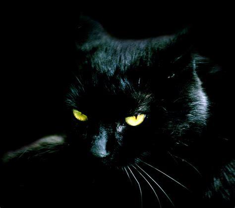 wallpaper whatsapp cats cute black cats kittens images wallpapers images whatsapp dp