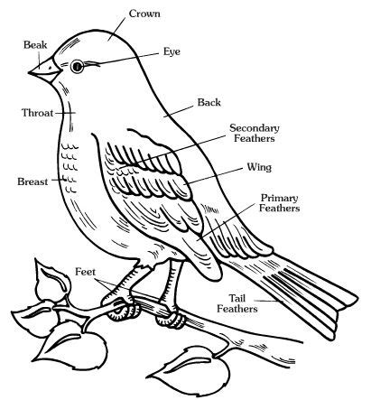 printable animal body parts free worksheets of animals body parts of birds