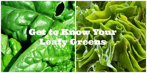 green vegetables p the gallery for gt leafy vegetables list with pictures