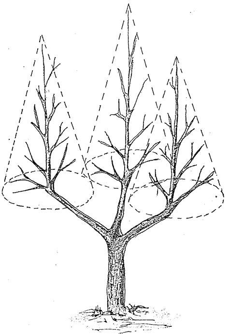 potatura a vaso come potare l ulivo allevamento a vaso policonico