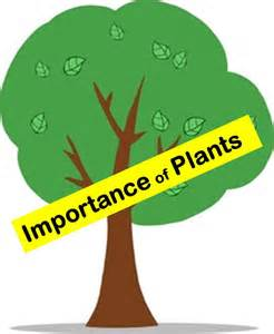importance of plants to humans and animals in everyday s life youtube