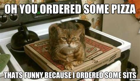 Cat Sitting Meme - funny pizza memes