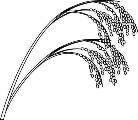 Rice Outline by Rice Plant Drawing Search Rice Plant Drawing Rice Plant And Rice