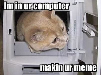 Internet Cat Meme - wrtg1310 memes