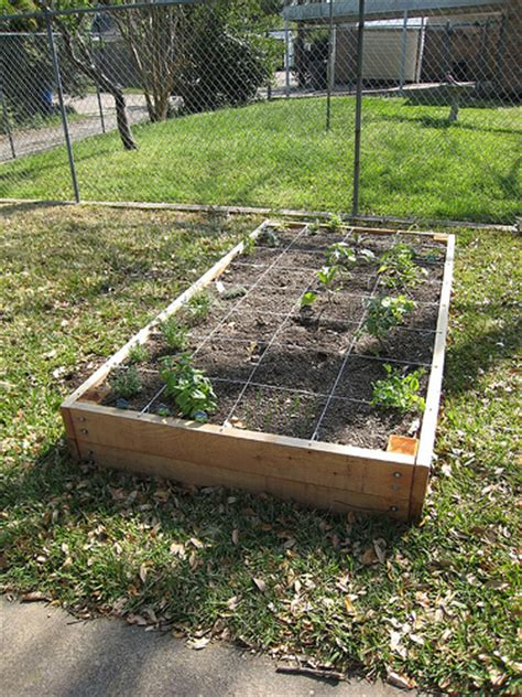 How To Fill A Raised Vegetable Garden Bed Filling The Raised Vegetable Garden Bed Erin Covert