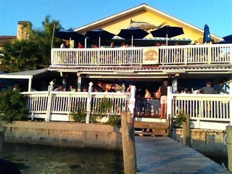 Mba Advisors St Petersburg Florida by Pelican Picture Of Pelican St Pete