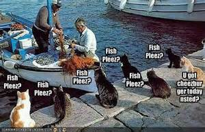 funny fishing boat images funny cats nether region of the earth iii