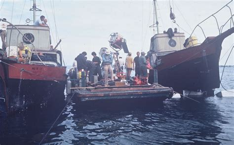 jaws head in boat 11 things you probably didn t know about jaws fandango