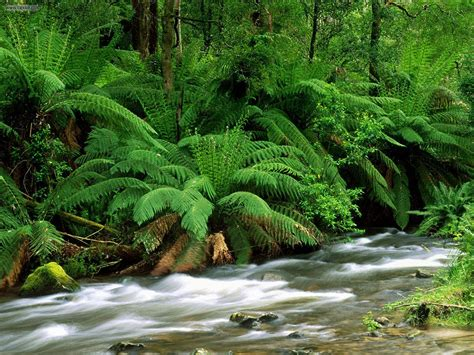 green wallpaper australia nature yarra ranges national park australia picture nr