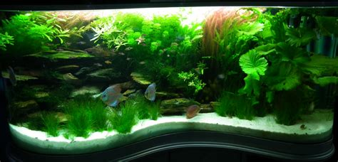 Freshwater Aquascaping Ideas by Home Design Stunning 360 Degree Saltwater Aquarium