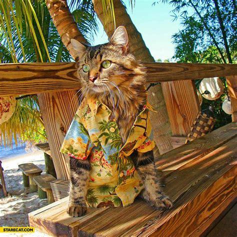 Cat On by Cat On Starecat
