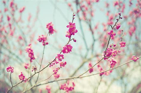 abbeville floral wallpaper pink natural image gallery naturaleza flores