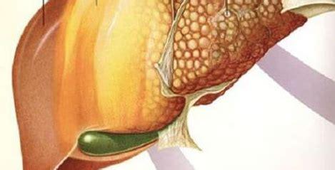 alimenti fegato grasso 6 alimenti per combattere il fegato grasso scienza