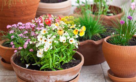 piante da vaso perenni piante perenni per il balcone le 7 pi 249 facili da curare