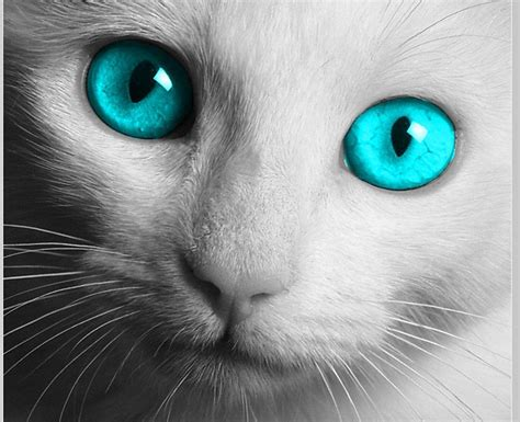 cat ke wallpaper white cat wallpapers wallpaper cave