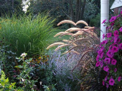 types of garden grass types of ornamental grasses diy