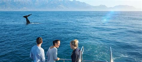 just add water boats ltd boat cruises in new zealand things to see and do in new