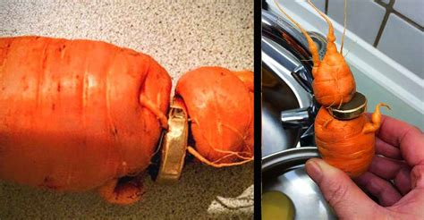 Wedding Ring In Carrot by After 3 Years Of Searching Finally Finds Lost Wedding