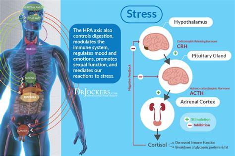 Detox Stress Hormones by Is Your Brain Enough Gaba Drjockers