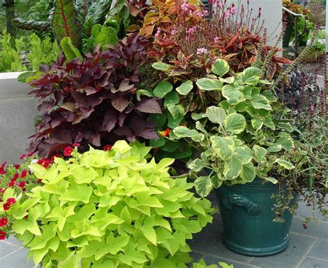 heat tolerant best container plants for full sun flowers for full sun heat tolerant garden ideas