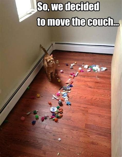 best sofa for cat owners 30 hilarious struggles only cat owners will understand