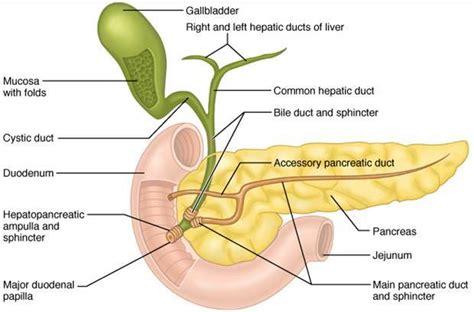 pancreatitis diagram pancreas diagram
