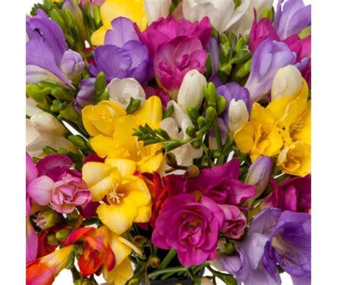 1325003905 fleurs tropicales calendrier anniversaire bouquet de freesias livraison de fleurs de freesias