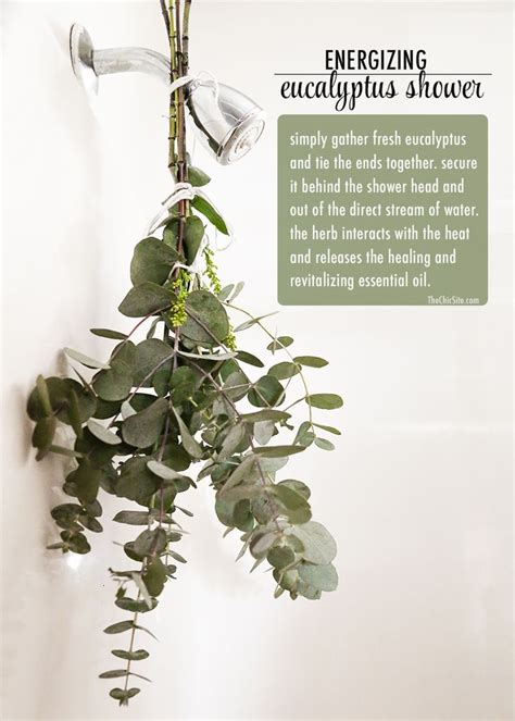 best 25 eucalyptus shower ideas on shower