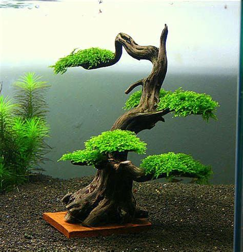 bonsai aquascape underwater bonsai aquascaping pinterest editor sexy