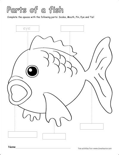 fish diagram coloring page parts of a fish preschool colouring activity http