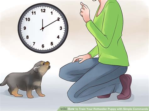 how to your rottweiler puppy with simple commands how to your rottweiler puppy with simple commands 14 steps