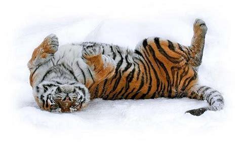 imagenes de invierno con animales t 233 l 233 chargez une image sur votre t 233 l 233 phone animaux hiver