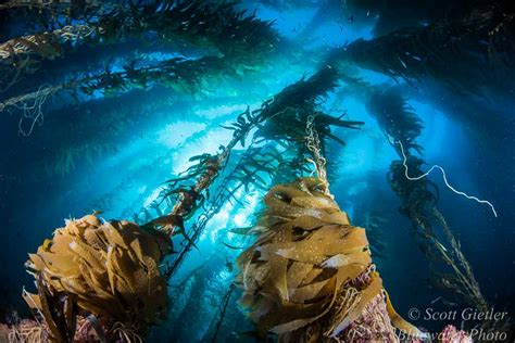 best underwater lensesunderwater photography guide best underwater lenses underwater photography guide