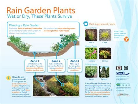 rain garden cross section pin by lorrie kunzler on rain gardens cisterns swales