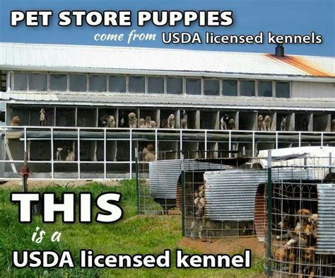 puppy mills in pa puppy mill laws dahna bender