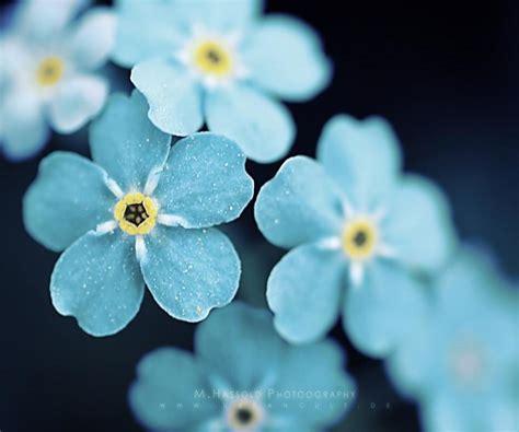 cute hd wallpaper of flowers cute flower wallpapers 13 background hdflowerwallpaper com