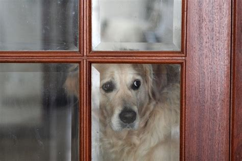 dogs with separation anxiety separation anxiety and how to treat it pet insurance